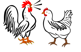 rooster-311092_960_720
